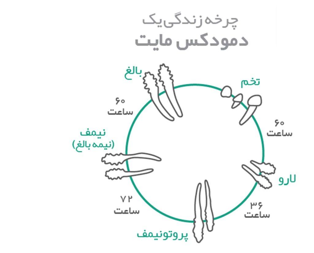 چرخه حیات مایت ها - تریتمنت دمودکس مایت